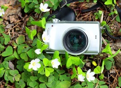 Photo digital camera in shamrock