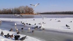Photo frozen lake with snow and blue sky. Seagulls, ducks, pigeons.