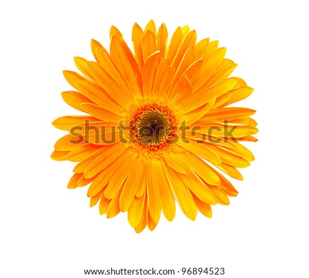 Photo gerbera isolated on white background
