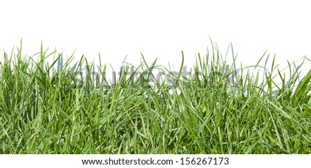 Photo grass, grass on white background, grass in sunlight, part of the meadows, juicy grass, green grass