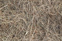 Photo Hay, straw, background, texture.