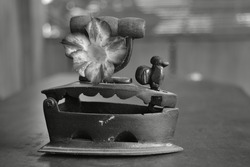 photo in black and white. Small ancient iron on wooden handle and a statue of a rooster with adenium flowers