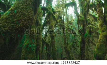 photo inside a rainforest covered in bright green moss