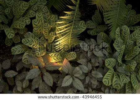 Photo looking down on conservatory floor filled with various plant species including Prayer plants and Palm plants with light illuminating plants from underneath.