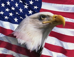 Photo montage: American bald eagle and American flag