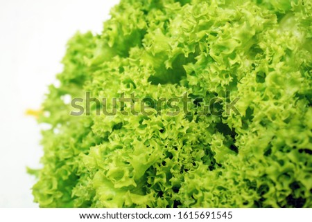photo near the lettuce leaves, which are fresh green, freshly picked and will be consumed directly, as a complement to a vegetable salad dish and served with soup.