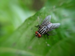 photo of a big fly perched on the leaves of a weed in the garden
