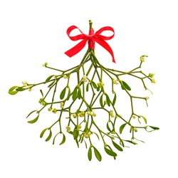 Photo of a bunch of Mistletoe tied with a red ribbon bow, isolated on a white background.