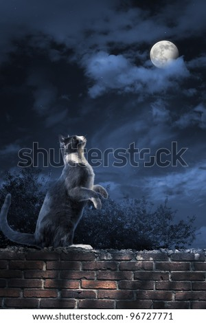 photo of a cat looking at the moon