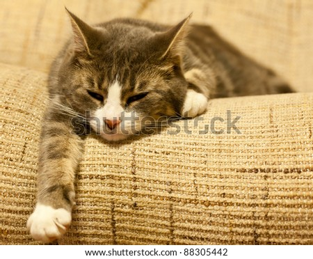 Photo of a cat on a settee