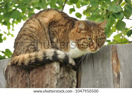 Photo of a cat on a wooden fence