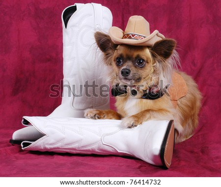 Photo of a Chihuahua dog with cowboy hat & boots