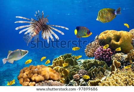 Photo of a coral colony on a reef