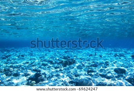 Photo of a coral colony on a reef, Egypt