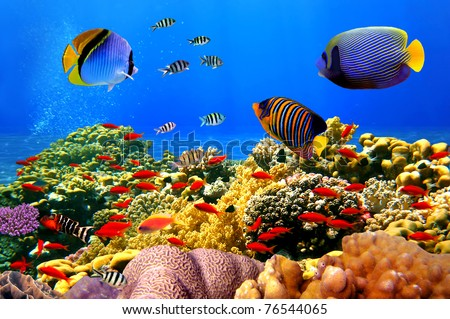 Stock Photo Photo of a coral colony on a reef, Egypt