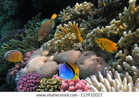 Photo of a coral colony on a reef,  Red Sea, Egypt. stock photo
