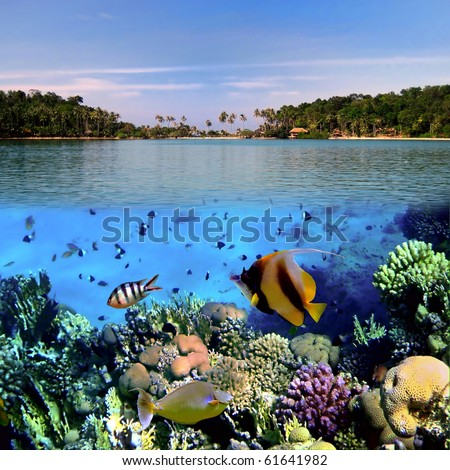 Photo of a coral colony on a reef top, Koh Cahg island, Thailand