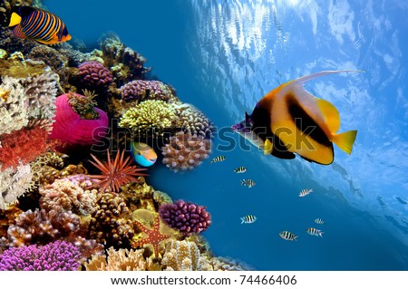 Photo of a coral colony on a reef top, Red Sea, Egypt