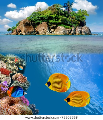 Photo of a coral colony on a reef top, Siam Bay, Thailand