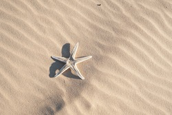 Photo of a dead starfish over sand at the beach.