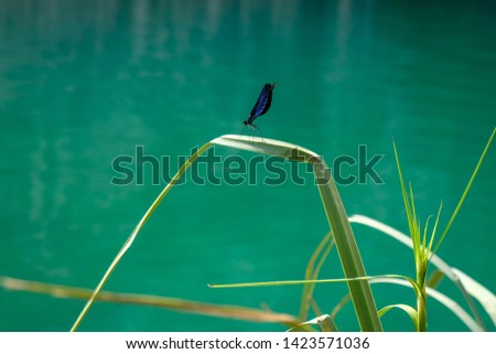 Photo of a dragonfly in a national park Plitvice lakes, Croatia