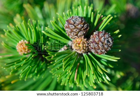 Photo of a fir bump