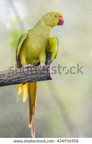 Photo of a green parrot in a bird Park in Kuala Lumpur in Malaysia