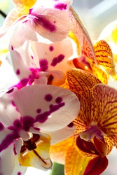 Photo of a Group of orchids