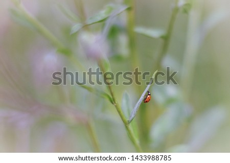 photo of a ladybug sitting on a burdock flower. Picture taken in cold tones with a beautiful blurry background