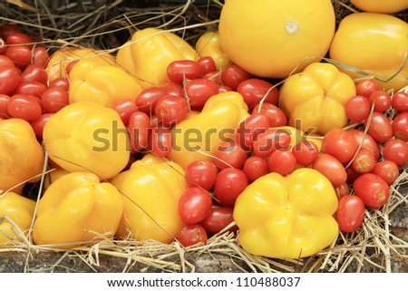 Photo of a large group of tomato and chili on straw