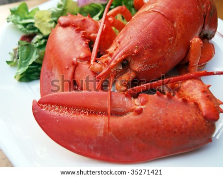 photo of a Maine lobster that's been steamed cooked till red on a white plate with salad on the side