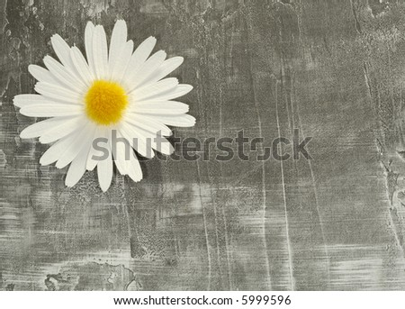 Photo of a Paper Flower on a Paper Background - Background / Texture