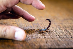 photo of a scorpion sting in a person's hand. Scorpion sting, danger scorpion poison.