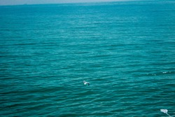 Photo of a seagull flying across the atlantic ocean in Morocco.This photo can be used as a background,or in an article wich talks about animals and wildlife in general.