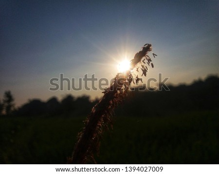 photo of a silhouette of weeds in the morning