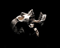 Photo of a skull on a black background