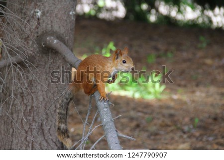 Photo of a squirrel on a branch in the forest