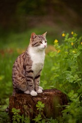 Photo of a tabby cat in the green grass.