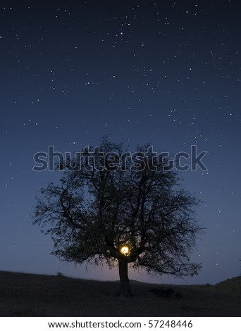 photo of a tree at night with moon and stars