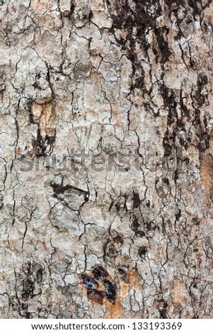 photo of a tree bark texture - stock photo