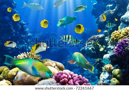 Photo of a tropical Fish on a coral reef