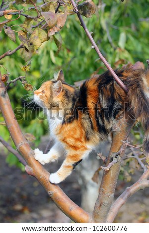 Photo of an adorable kitten in a tree