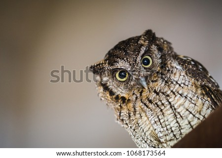 Photo of an owl in macro photography, high resolution photo of owl cub. The owl hides in holes to live