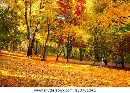 Photo of Autumn Leaves a sunny day
