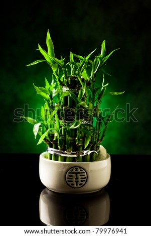 photo of bamboo plant on black glass table with green spot light