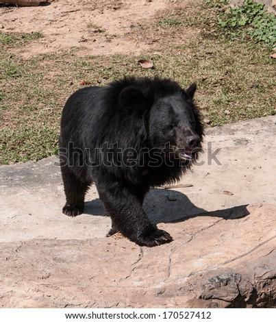 Photo of Bear in zoo