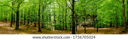 Photo of beautiful green forests. Spruces and trail in the forest. Summer mountain background. Park near the rocks in the forest Foto stock ©