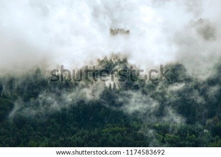 Photo of beautiful moody misty green coniferous forests in Alps  #1174583692