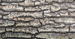 Photo of beautiful old wood tree texture background