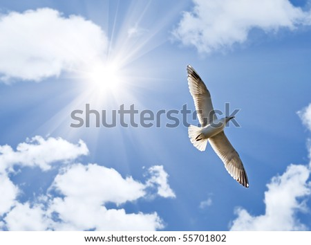 photo of big seagull in sky with clouds and bright sun